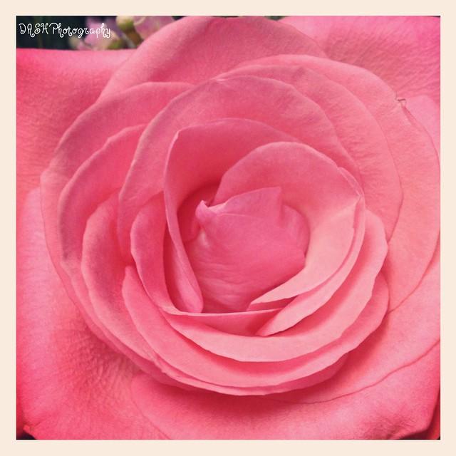 photoflower-w