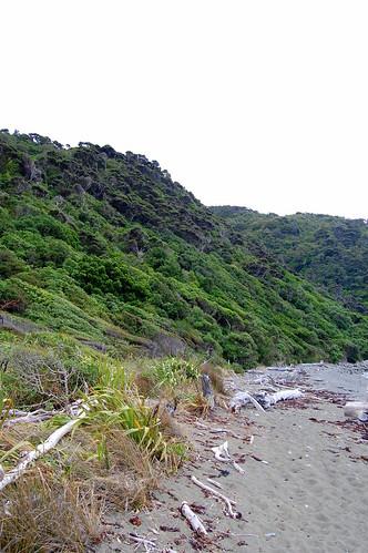 Beach on Kapiti Island