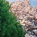 Ossington Magnolia by islets