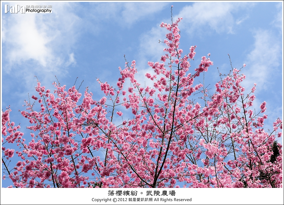 Wuling_0087