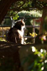 Sunny spot of a garden