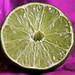 Lime by sheiro