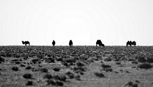 Gobi Desert day 4