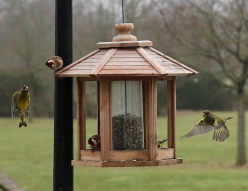 Mangeoire oiseaux du ciel images - Mangeoire pour oiseaux du ciel ...