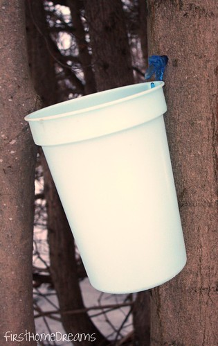 maple syrup tap collection bucket plastic