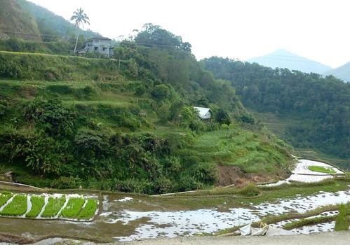Luzon-Banaue-Batad (8)