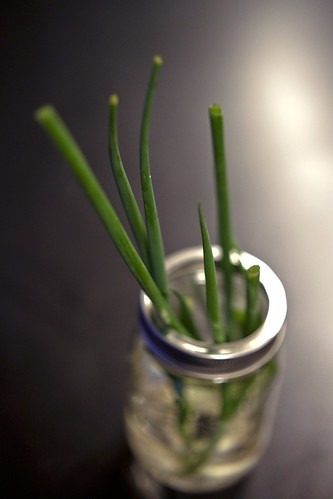 Re-Growing Green Onions