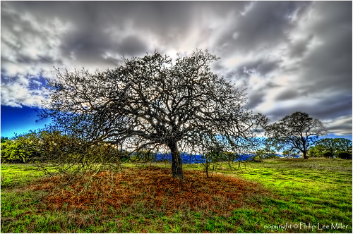 california nature grass clouds landscape stanford hdr oaktrees d7000 cuercus theacademytreealley stanfordweekendacres