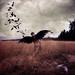Giving My Wings Back by Boy_Wonder