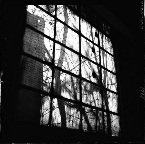 Urban Decay - Inglewood II-11