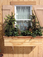 CLFS window box w conifers '12