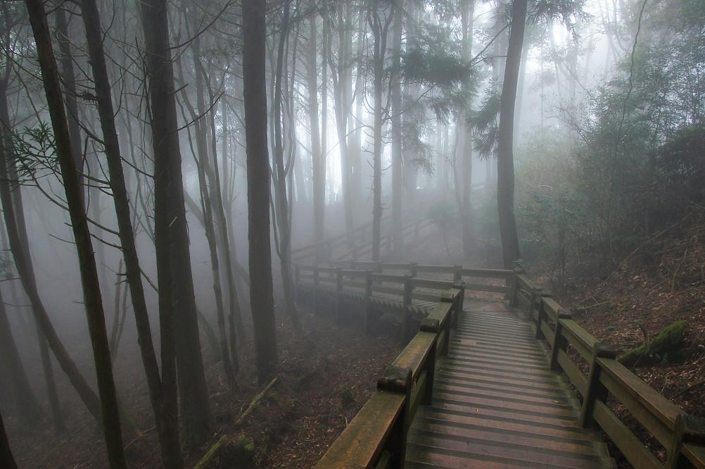 觀霧巨木步道-072