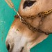 Donkey Lamu Kenya 2