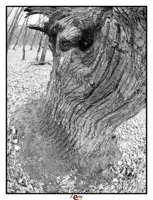 Le peuple de la forêt - Page 3 6994328125_44c02da9a5_z