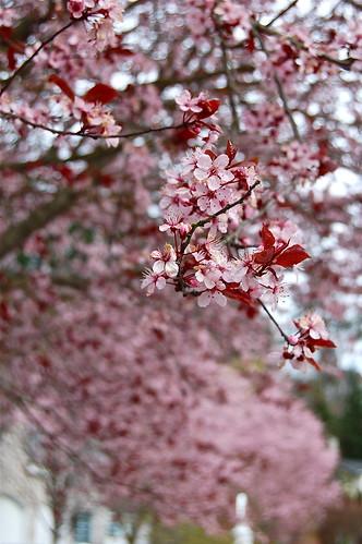 pink.2012.2