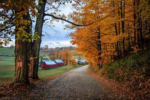 fall vermont newengland foliage jennefarm