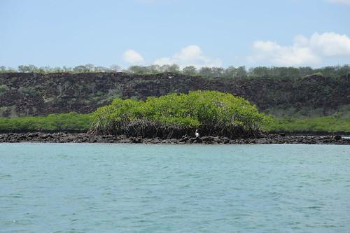 サンタ・クルス島とマングローブ