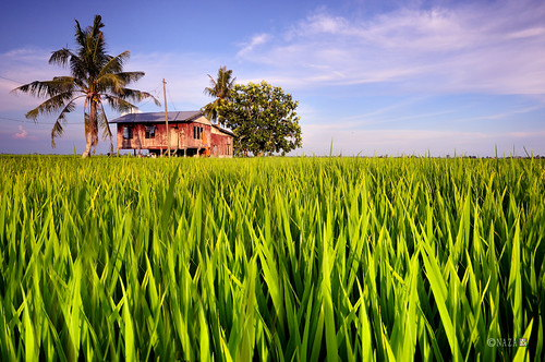 Little House On The Rice Paddy