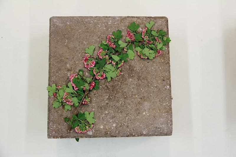 Herbarium #1_5