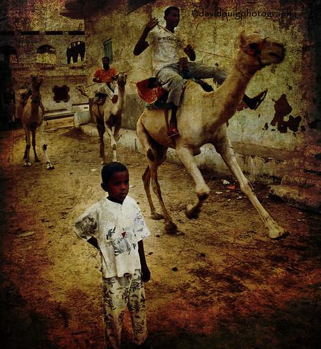 trip travel viaje people texture textura canon gente transport egypt egipto aswan camels 2009 transporte camellos nubianvillage 450d pobladonubio photoshopcreativo bestportraitsaoi magicunicornverybest magicunicornmasterpiece