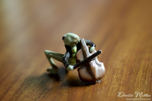 Grasshopper serenade