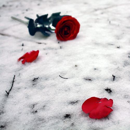 Fallen Lovers