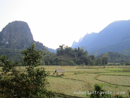 fields near Muang Ngoi