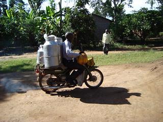 Moving milk by motorbike in Tanzania