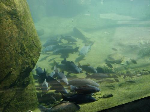 Bronx Zoo: Fish #2