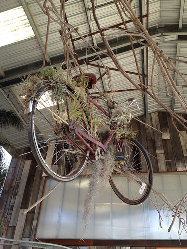 Air plant bike at the nursery!
