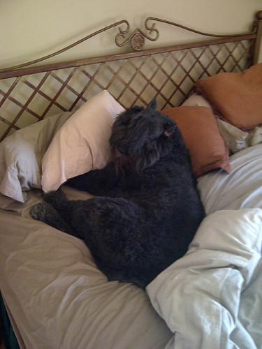 Lili snoozing
