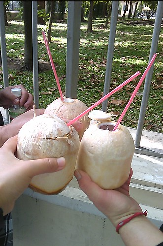 20120117-0129 Vietnam Mobile - Coconut
