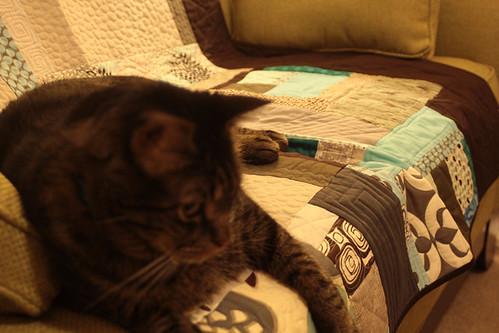 Katt coordinated