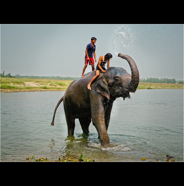 Elephant taking a Shower (Nepal)