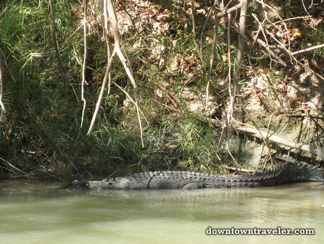 Australian Outback Kakadu Crocodile