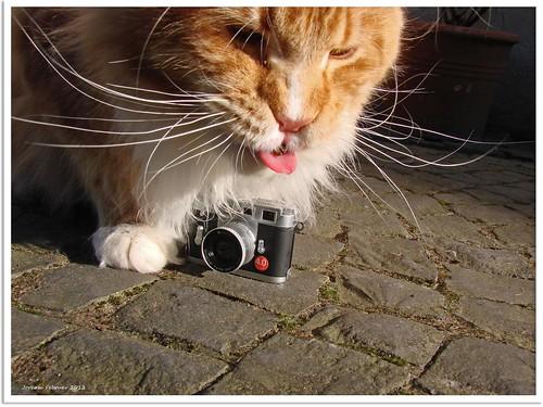 Nice Photos Of Animals photos