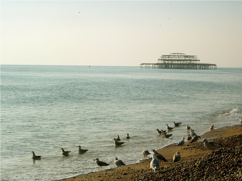Brighton seagulls by PhotoPuddle