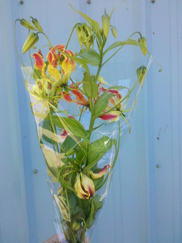 fresh cut gloriosa lily flowers on the vine.
