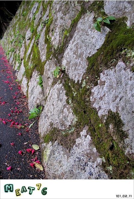 【遊記】陽明山國家公園|櫻花乍現在粉紅意境的花花世界07