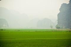 Baie d'Ha Long Terrestre - Ninh Binh - Hoa Lu - 15