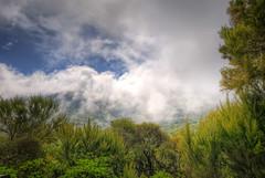 La Gomera - Parque Nacional de Garajonay