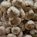 Garlic Bunches at Etla Market - Oaxaca, Mexico