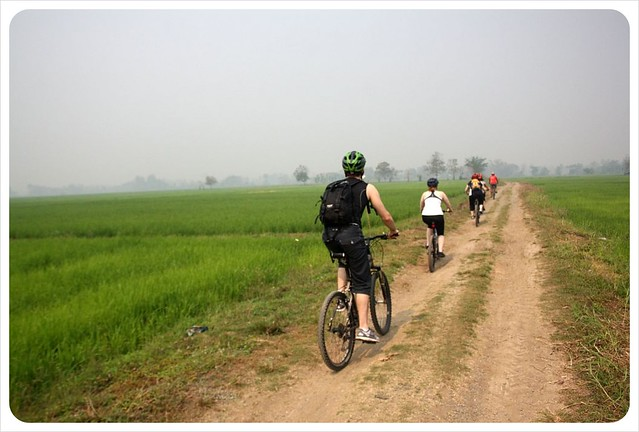 cycling through rice paddies northern thailand