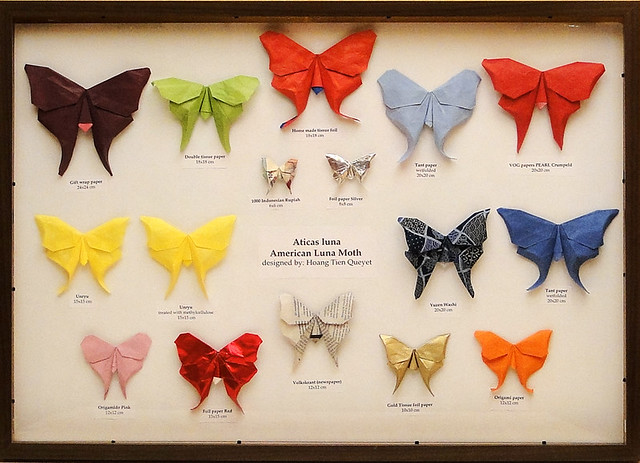 American luna moth (Hoang Tien Quyet)