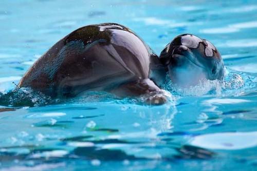Ilse y Sanibel (madre-hija) -Delfin Mular Loro Parque-