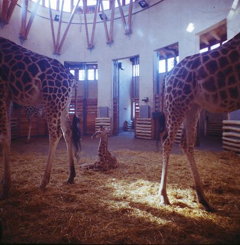 Lara&Zoo_0002