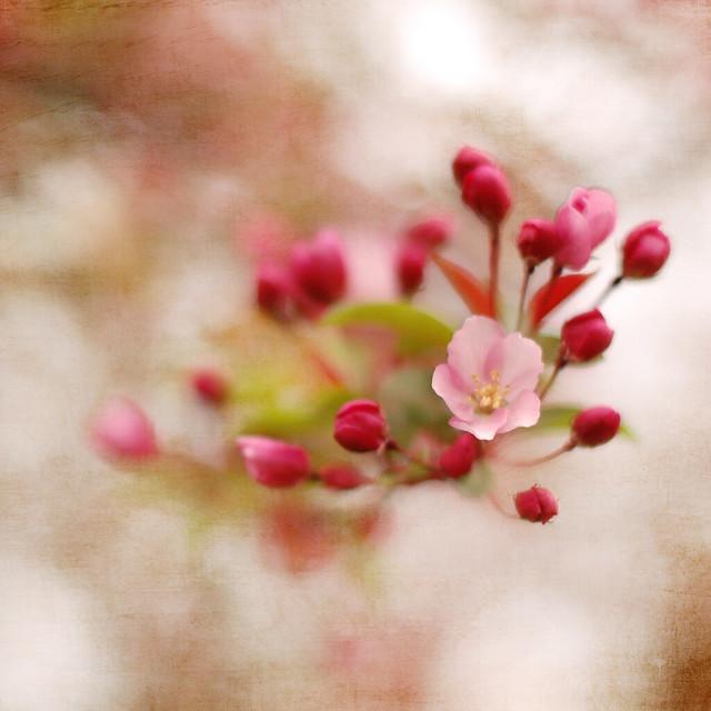soft blossoms2-2