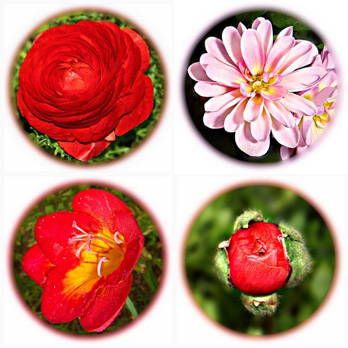 Flowers ~ all Flowers ~ only Flowers
