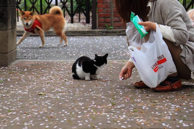 ムック犬と猫 2