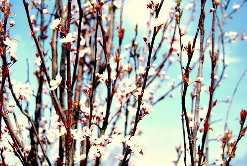 WPIR - blossoming-001